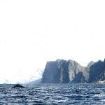 point-wild-whale