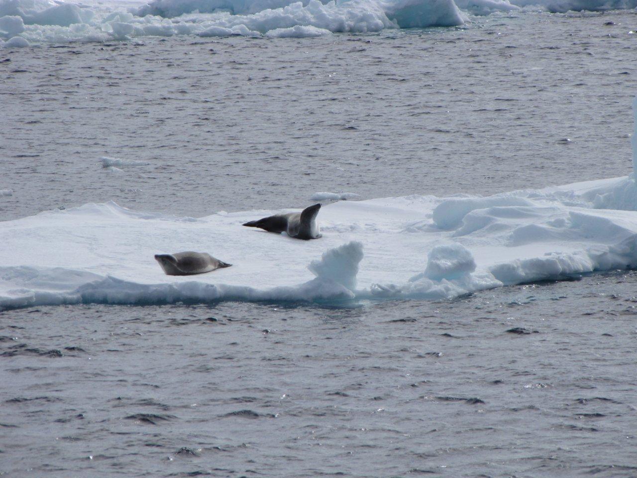 Ice shelves, icebergs and sea ice in Antarctica